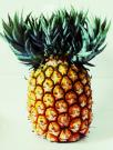 Moosa pineapple